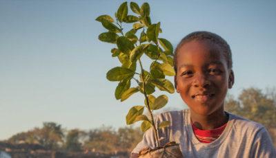 Imagen del informe, un niño con una planta en la mano