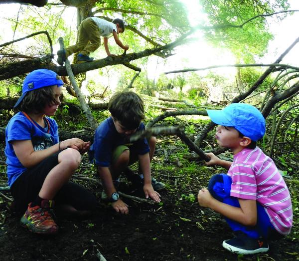 Imagen de niños en el bosque escuela