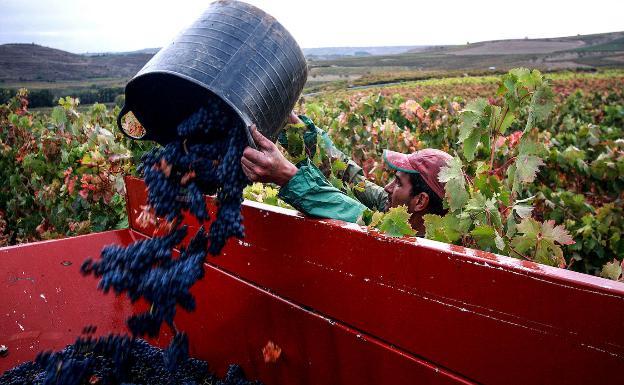 Imagen de un joven extranjero echando uvas en un camión