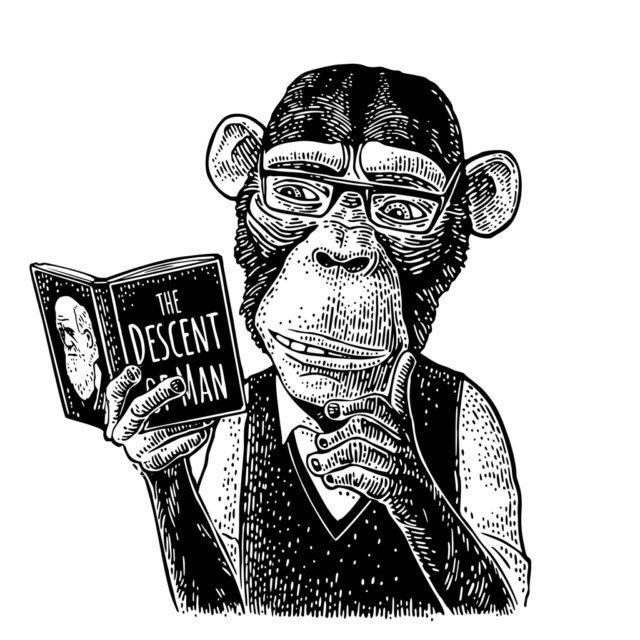 dibujo de un mono leyendo un libro